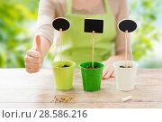 Купить «close up of gardener with pots showing thumbs up», фото № 28586216, снято 3 марта 2015 г. (c) Syda Productions / Фотобанк Лори