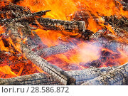 Купить «Trees in plantation burning in forest fire, Egremont, Cumbria, England, UK, August 2006.», фото № 28586872, снято 15 августа 2018 г. (c) Nature Picture Library / Фотобанк Лори