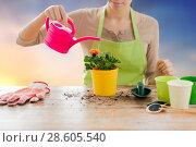 Купить «close up of woman planting and watering roses», фото № 28605540, снято 3 марта 2015 г. (c) Syda Productions / Фотобанк Лори