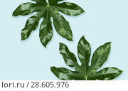 Купить «green leaves on blue background», фото № 28605976, снято 25 июня 2019 г. (c) Syda Productions / Фотобанк Лори