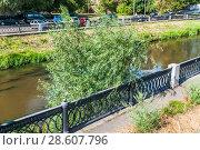 Купить «Ива (Salix) на набережной реки Яузы в засуху 2010 года. Москва», фото № 28607796, снято 21 августа 2010 г. (c) Алёшина Оксана / Фотобанк Лори