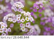 Купить «флора, фон», фото № 28648844, снято 17 июня 2018 г. (c) Tamara Kulikova / Фотобанк Лори