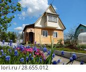Деревянный дом на дачном участке в шесть соток и весенние цветы мускари (2016 год). Стоковое фото, фотограф lana1501 / Фотобанк Лори
