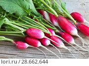 Купить «Fresh radishes with oblong root-crops on a wooden background. Organic food», фото № 28662644, снято 26 июня 2018 г. (c) Виктория Катьянова / Фотобанк Лори