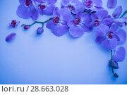 Купить «orchids on blue background», фото № 28663028, снято 13 марта 2018 г. (c) Майя Крученкова / Фотобанк Лори