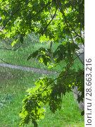 Купить «Дождь при свете солнца», фото № 28663216, снято 23 июня 2018 г. (c) Алёшина Оксана / Фотобанк Лори
