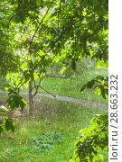 Купить «Грибной (слепой) дождь при солнечном свете», фото № 28663232, снято 23 июня 2018 г. (c) Алёшина Оксана / Фотобанк Лори