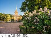 Купить «Санкт-Петербург. Адмиралтейство и сирень. Bushes of white lilacs near the Admiralty», фото № 28664552, снято 3 июня 2018 г. (c) Baturina Yuliya / Фотобанк Лори