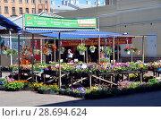 Купить «Сытный рынок, Санкт-Петербург. Продажа рассады», фото № 28694624, снято 28 июня 2018 г. (c) Светлана Колобова / Фотобанк Лори