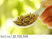 Купить «Edible worms.», фото № 28700508, снято 17 июня 2018 г. (c) easy Fotostock / Фотобанк Лори