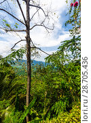 Купить «Живописный вид с горы на поля, джунгли и и долину Краби, Таиланд», фото № 28705436, снято 17 февраля 2013 г. (c) Игорь Рожков / Фотобанк Лори