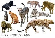 Купить «Set of African predators isolated over white», фото № 28723696, снято 15 октября 2018 г. (c) Яков Филимонов / Фотобанк Лори