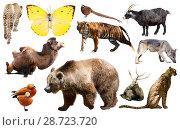 Купить «asia animals isolated», фото № 28723720, снято 13 декабря 2018 г. (c) Яков Филимонов / Фотобанк Лори