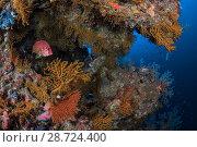 Купить «Safree squirrel fish (Sargocentron spiniferum) Safaga, Red Sea, Egypt», фото № 28724400, снято 22 июля 2018 г. (c) Nature Picture Library / Фотобанк Лори