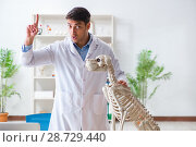 Купить «Doctor vet practicing on dog skeleton», фото № 28729440, снято 23 марта 2018 г. (c) Elnur / Фотобанк Лори
