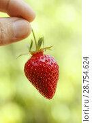 Купить «Strawberry.», фото № 28754624, снято 1 июня 2018 г. (c) easy Fotostock / Фотобанк Лори