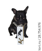 Купить «French bulldog proudly advertises dog food.», фото № 28754976, снято 31 декабря 2012 г. (c) easy Fotostock / Фотобанк Лори
