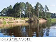 Купить «Летний пейзаж Пестерёвской рощи с упавшей сосной в реку Вагу», фото № 28773012, снято 15 июля 2018 г. (c) Николай Мухорин / Фотобанк Лори