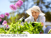 Купить «senior woman with garden pruner and allium flowers», фото № 28773616, снято 3 июня 2018 г. (c) Syda Productions / Фотобанк Лори