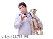 Купить «Doctor with dog skeleton isolated on white background», фото № 28781108, снято 27 февраля 2018 г. (c) Elnur / Фотобанк Лори