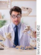 Купить «Funny crazy professor studying animal skeletons», фото № 28782452, снято 7 марта 2018 г. (c) Elnur / Фотобанк Лори