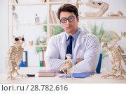 Купить «Funny crazy professor studying animal skeletons», фото № 28782616, снято 7 марта 2018 г. (c) Elnur / Фотобанк Лори