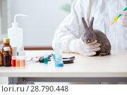 Купить «Vet doctor checking up rabbit in his clinic», фото № 28790448, снято 4 апреля 2018 г. (c) Elnur / Фотобанк Лори