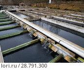 Купить «Opened reservoirs of fish farm», фото № 28791300, снято 4 февраля 2018 г. (c) Яков Филимонов / Фотобанк Лори