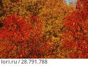 Купить «Желтые и красные деревья осенью», эксклюзивное фото № 28791788, снято 6 октября 2011 г. (c) lana1501 / Фотобанк Лори