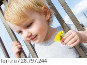 Купить «Маленькая девочка с цветком одуванчика смотрит сквозь решетку забора», фото № 28797244, снято 6 июня 2018 г. (c) Момотюк Сергей / Фотобанк Лори