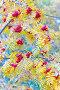 Купить «Bunches of ripe rowan.», фото № 28803764, снято 13 октября 2017 г. (c) Акиньшин Владимир / Фотобанк Лори