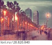 Купить «Palm alley on waterfront in Barcelona in summer evening», фото № 28820840, снято 27 августа 2017 г. (c) Яков Филимонов / Фотобанк Лори