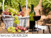 Купить «red wine ripe grapes and picnic basket on table in vineyard», фото № 28826224, снято 11 сентября 2017 г. (c) Татьяна Яцевич / Фотобанк Лори