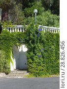 Купить «The wall with an arch, covered with green ivy», фото № 28826456, снято 8 июля 2018 г. (c) Григорий Стоякин / Фотобанк Лори