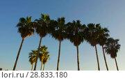 Купить «palm trees over sun shining in blue sky», видеоролик № 28833180, снято 8 июля 2018 г. (c) Syda Productions / Фотобанк Лори