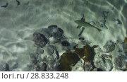 Купить «koi fishes swimming in transparent shallow water», видеоролик № 28833248, снято 3 июля 2018 г. (c) Syda Productions / Фотобанк Лори