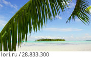 Купить «tropical beach with palm tree in french polynesia», видеоролик № 28833300, снято 1 июля 2018 г. (c) Syda Productions / Фотобанк Лори
