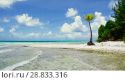 Купить «tropical beach with palm trees in french polynesia», видеоролик № 28833316, снято 1 июля 2018 г. (c) Syda Productions / Фотобанк Лори