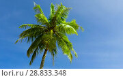Купить «palm tree over blue sky», видеоролик № 28833348, снято 1 июля 2018 г. (c) Syda Productions / Фотобанк Лори