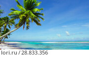Купить «tropical beach with palm trees in french polynesia», видеоролик № 28833356, снято 1 июля 2018 г. (c) Syda Productions / Фотобанк Лори