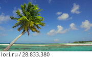 Купить «tropical beach with palm tree in french polynesia», видеоролик № 28833380, снято 1 июля 2018 г. (c) Syda Productions / Фотобанк Лори