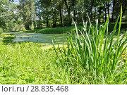 Купить «Заросший пруд, летний пейзаж», фото № 28835468, снято 18 августа 2017 г. (c) Илюхина Наталья / Фотобанк Лори
