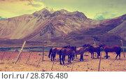 Купить «Andes near Las Lenas», фото № 28876480, снято 9 февраля 2017 г. (c) Яков Филимонов / Фотобанк Лори
