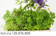 Купить «green herbs or spices in wooden box on table», видеоролик № 28876808, снято 17 июля 2018 г. (c) Syda Productions / Фотобанк Лори