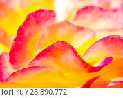 Купить «Abstract background of rose petals», фото № 28890772, снято 1 августа 2018 г. (c) Антон Гвоздиков / Фотобанк Лори