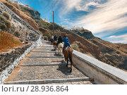 Tourists on donkeys climb the stairs, Fira, Santorini. Стоковое фото, фотограф Коваленкова Ольга / Фотобанк Лори