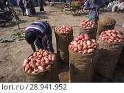 Купить «Labors are stacking vegetables in mahasthan hat (popular vendor market), Bogra district, Bangladesh.», фото № 28941952, снято 15 февраля 2018 г. (c) age Fotostock / Фотобанк Лори
