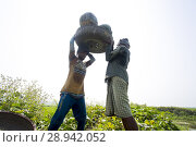 Купить «The Arial Beel (water body) of Munshiganj is famous for producing special kind of big-sized of sweet pumpkins, the local growers are making a huge profit...», фото № 28942052, снято 4 марта 2018 г. (c) age Fotostock / Фотобанк Лори