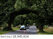 Купить «Poland, Pomeranian - tree lined avenue», фото № 28945824, снято 27 августа 2015 г. (c) Caro Photoagency / Фотобанк Лори