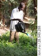 Купить «Kakuma, Kenya - Gardening in Kakuma refugee camp, managed and funded by GIZ / UNHCR.», фото № 28949288, снято 31 августа 2015 г. (c) Caro Photoagency / Фотобанк Лори